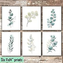 Botanical Prints Wall Art - Eucalyptus Leaves - (Set of 6) - Unframed - 11x14s
