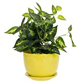 MyGift 7 inch Yellow Sunburst Ceramic Flower Pot with Saucer