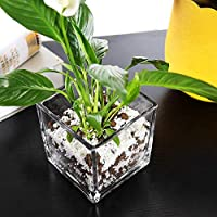 シンプルな厚いガラス透明植木鉢屋内多肉植物ポットデスクトップ装飾水文化花水植物花瓶四角いシリンダー大きなDIYオフィス装飾的な装飾品