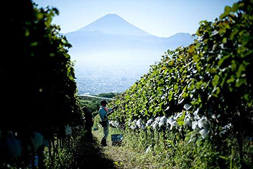【100余年の歴史を持つ自園産ぶどう100%】日本ワイン登美の丘登美ノーブルドール[2009白ワイン甘口日本750ml]
