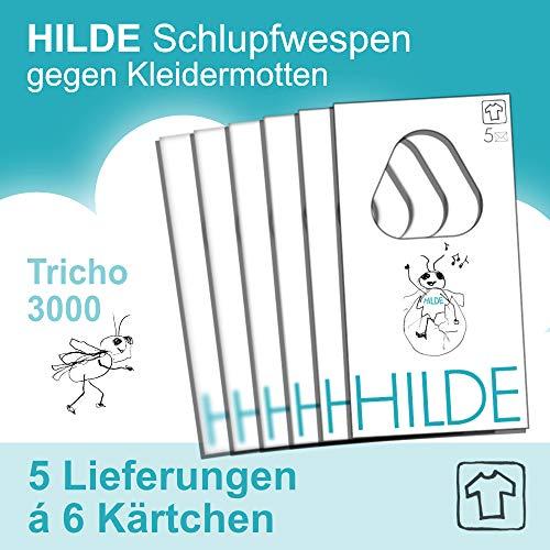 HILDE 6 Karten | 5 Lieferungen (= 30 Karten in 15 Wochen) Schlupfwespen gegen Kleidermotten | natürlich - wirksam - chemiefrei - schonend