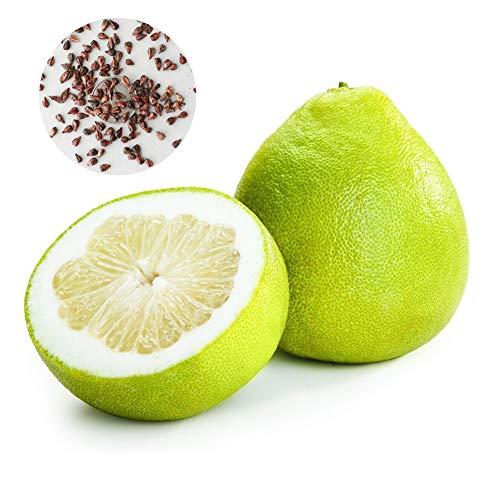 Feli546Bruce Pampelmuse Samen, 10 Stück Pampelmuse Citrus Grapefruit Shaddock Süßer Obstbaum Gartenpflanzensamen Pampelmusensamen