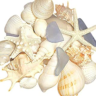 Best shells and coral home decor Reviews