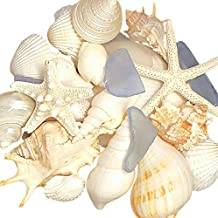 Tumbler Home Seashell Mix with Sea Glass - Home Decor Wedding Luxury Sea Shell Mix, Christmas or Crafts