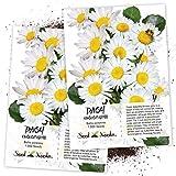 Seed Needs, White English Daisy ...