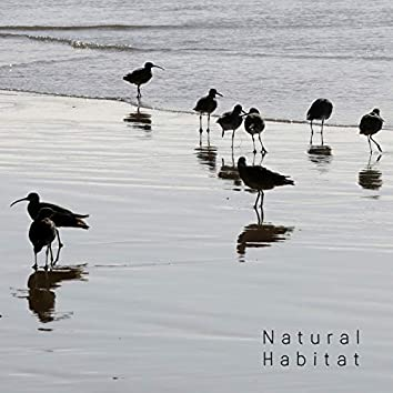 Natural Habitat - Collection of Nature Sounds: Water and Birds