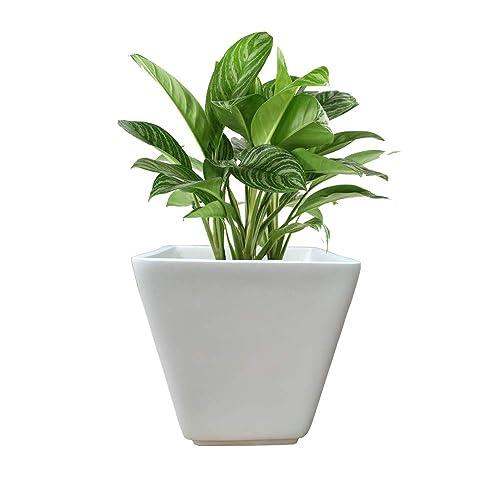 Yuccabe Italia Gk Planter Large
