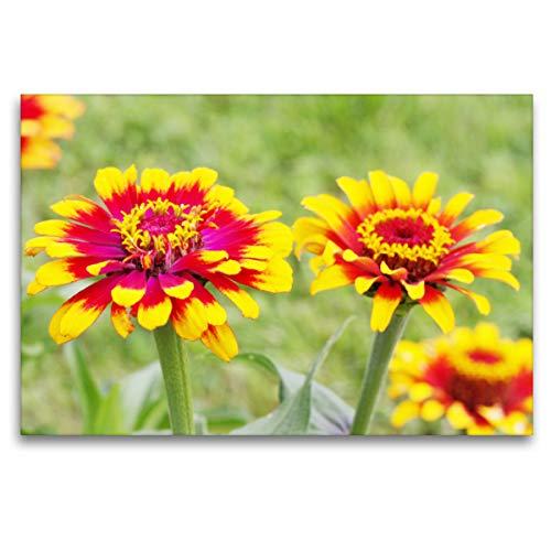 Premium Textil-Leinwand 120 x 80 cm Quer-Format Gelb-rote Zinnien | Wandbild, HD-Bild auf Keilrahmen, Fertigbild auf hochwertigem Vlies, Leinwanddruck von Gisela Kruse