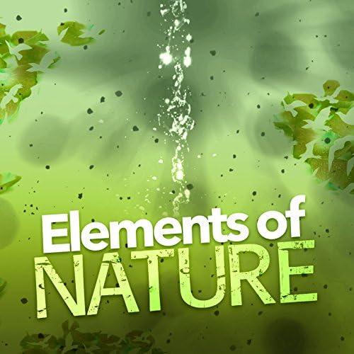 Nature Sounds 2015