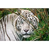 Tigre animal﹣juegos de pintura por números﹣Kit de Pintura al óleo de Lienzo acrílico﹣manualidades para decoración de paredes del hogar﹣40x50cm﹣(Sin marco)