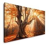 Paul Sinus Art Magischer Alter Baum 120x 60cm Panorama