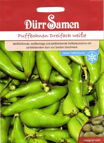 Bohnen - PuffBohnen - Dreifach weiße von Dürr-Samen