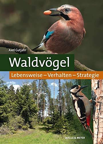 Waldvögel: Lebensweise – Verhalten – Strategie