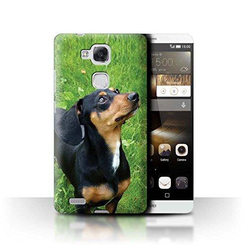 Hülle Für Huawei Ascend Mate7 H&/Eckzahn Rassen Dackel/Dachsh& Design Transparent Ultra Dünn Klar Hart Schutz Handyhülle Case