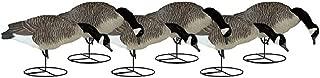 Dakota Decoy Signature Series Flocked Goose Decoys 6 Pack, Feeder