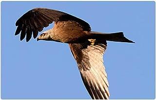 Tree26 Indoor Floor Rug/Mat (23.6 x 15.7 Inch) - Spain Imperial Eagle Raptor Bird of Prey Eagle