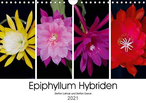 Epiphyllum-Hybriden (Wandkalender 2021 DIN A4 quer)