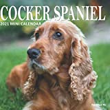 Cocker Spaniel: 2021 Mini Calendar (Furry Dog Friends)