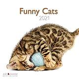 Funny Cats 2021 - Wand-Kalender - Broschüren-Kalender - A&I - 30x30 - 30x60 geöffnet