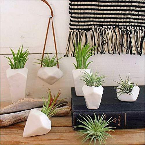ShopMeeko GRAINES: 2016 A grande vente 100 Pcs/s plantes sac couleur pour plantes d'intérieur de Noël Mini Bonsai Hanging décoratif Accueil * Jardin des Plantes: Violet