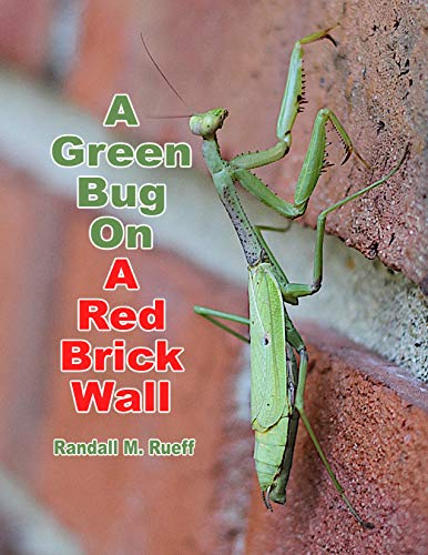 A Green Bug On A Red Brick Wall (English Edition)