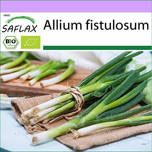 SAFLAX - Ecológico - Cebolla tierna - Ishikura japonés -