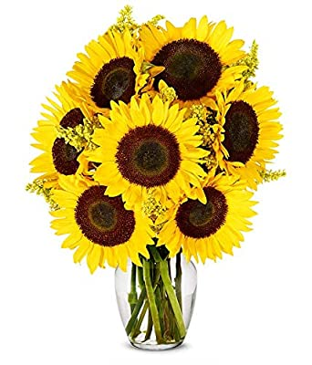 Flowers - Stunning Sunflowers (Free Vase Included) from From You Flowers