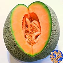 CER0T Egrow 50Pcs/Pack Cantaloupe Seeds Honey Yellow Flesh Sweet Melon Fruit Seed Summer Muskmelon Plants