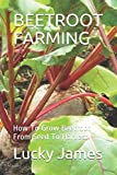 BEETROOT FARMING: How To Grow Beetroot From Seed To Harvest