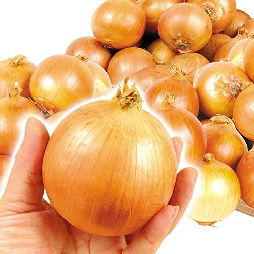 国華園 淡路島産 グルメこたまねぎ 10�s 1組 野菜