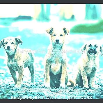 Выгул собак (Воспоминания)