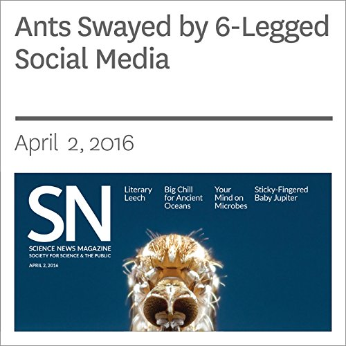 Ants Swayed by 6-Legged Social Media audiobook cover art
