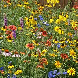 Wisconsin Wildflower Seed Mix, 1 Ounce