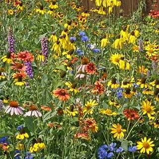 Nebraska Wildflower Seed Mix, 1 Ounce