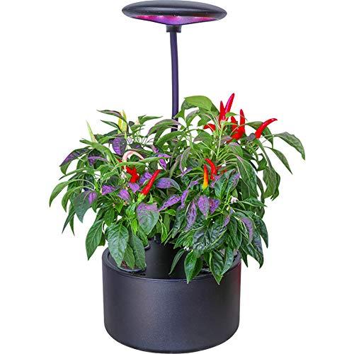 ZDYLM-Y Sistema hidroponía, 4-Pod Interior de jardinería Hierbas del jardín Starter Kits, Buen Regalo para el Crecimiento Familiar