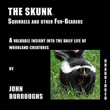 The Skunk (Unabridged), a valuable insight into the daily life of woodland creatures, by John Burroughs
