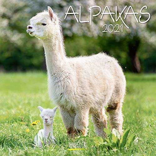 Alpaka 2021: Broschürenkalender mit Ferienterminen. Format: 30 x 30 cm