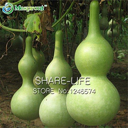 Bouteille Natural Gourd Seed 5PCS Graines de chaque Seeds Gourd pack Big Wine Spoon Lagenaria siceraria uniques Artistique