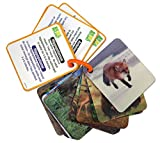 Smart Play Animal Planet 3D Flash Cards - Wild Animals