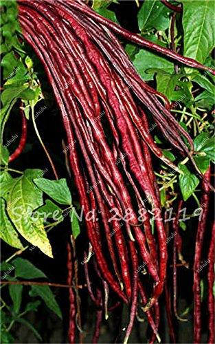 10 Pcs Multi Color long haricots Graines santé Graines de légumes biologiques, la croissance naturelle pour jardin délicieux savoureux bon 1