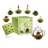 Creano Teeblümen Mix - Set de regalo de té con jarra de cristal para té verde con aroma afrutado (6 variedades), diseño de nenúfar