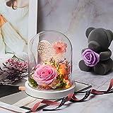 Kit de Rosas,La Bella y La Bestia Rosa Encantada,Rosa Eterna Roja, 100 Idiomas Te Amo Rosa de Seda Roja y luz LED Flor en Cúpula Vidrio con Pedestal de Madera(Rosado)