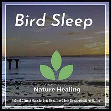 Bird Sleep - Ambient & Serene Music For Deep Sleep, Slow & Long Sleeping Music For Healing