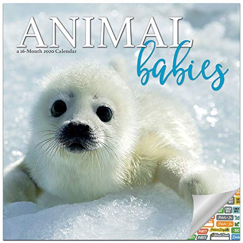Animal Babies Calendar 2020 Set - Deluxe 2020 Animal Babies Wall Calendar with Over 100 Calendar Stickers (Animal Babies Gifts, Office Supplies)