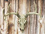 Ebros 18.5' L 10 Point Buck Head Wall Mount Resin Stag Deer Skull Antler Rack Bust Hunting Cabin or Lodge Decor Skull Antlers Home Accent
