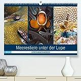 Meerestiere unter der Lupe - Unterwasserkalender (Premium, hochwertiger DIN A2 Wandkalender 2020,...