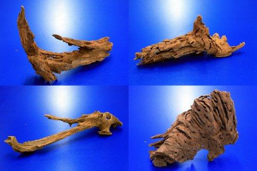 WFW wasserflora Mangroven-Wurzel Nano Gr. S / 15-20 cm Mangrovenholz