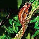 Raspbery Reptil Escalada Vid Selva Artificial Selva Vides Curva...