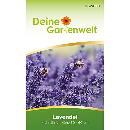 Lavendel Samen mehrjährig |...