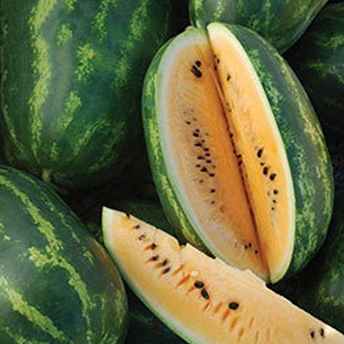 Orange Flesh Tendersweet Watermelon Seeds - 40+ Rare Organic Heirloom Fruit Seeds in FROZEN SEED CAPSULES for the Gardener & Rare Seeds Collector - Plant Seeds Now or Save Seeds for Years